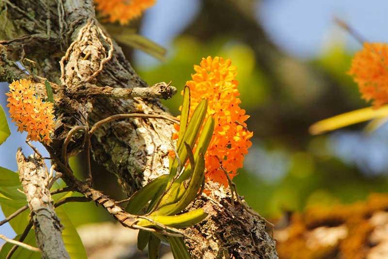 Hệ sinh thái phong phú vườn quốc gia Yok Đôn