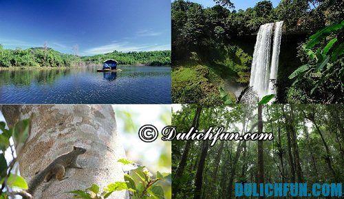 Khu bảo tồn thiên nhiên Tà Đùng là điểm du lịch hấp dẫn tại Đăk Nông