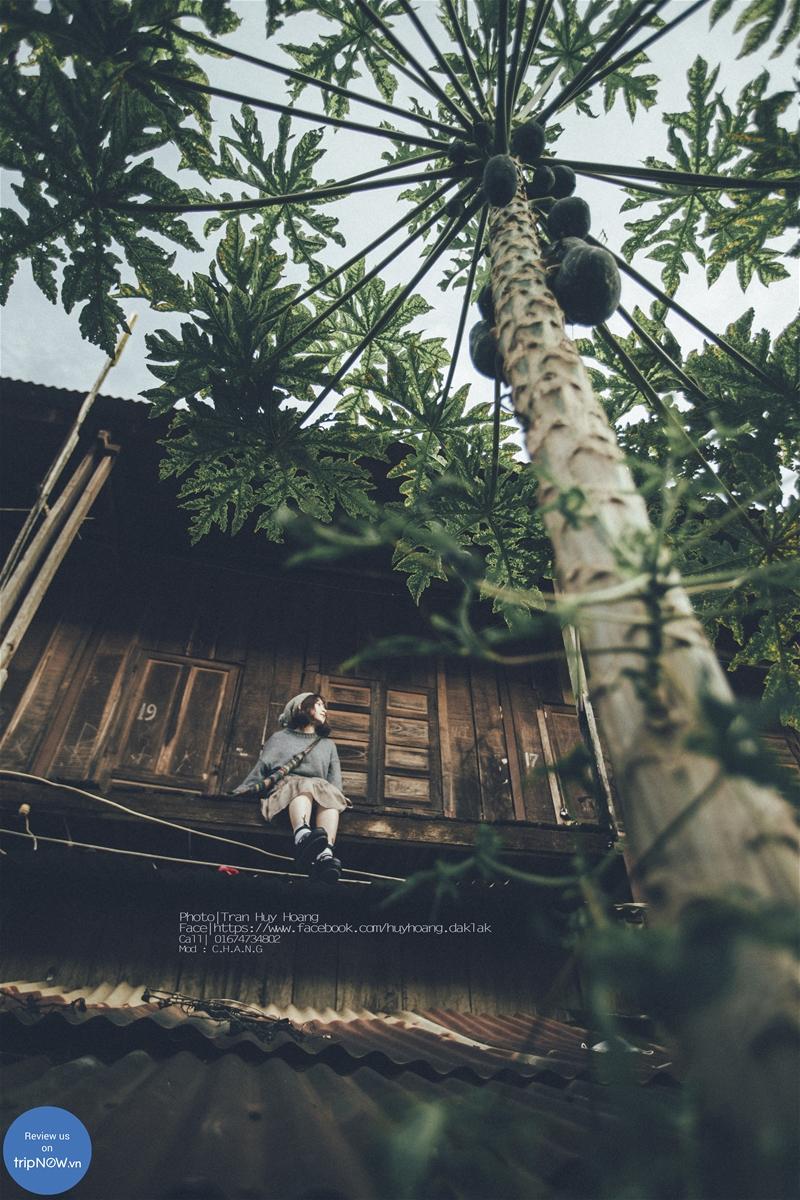 Review khu nhà gỗ chụp hình đẹp