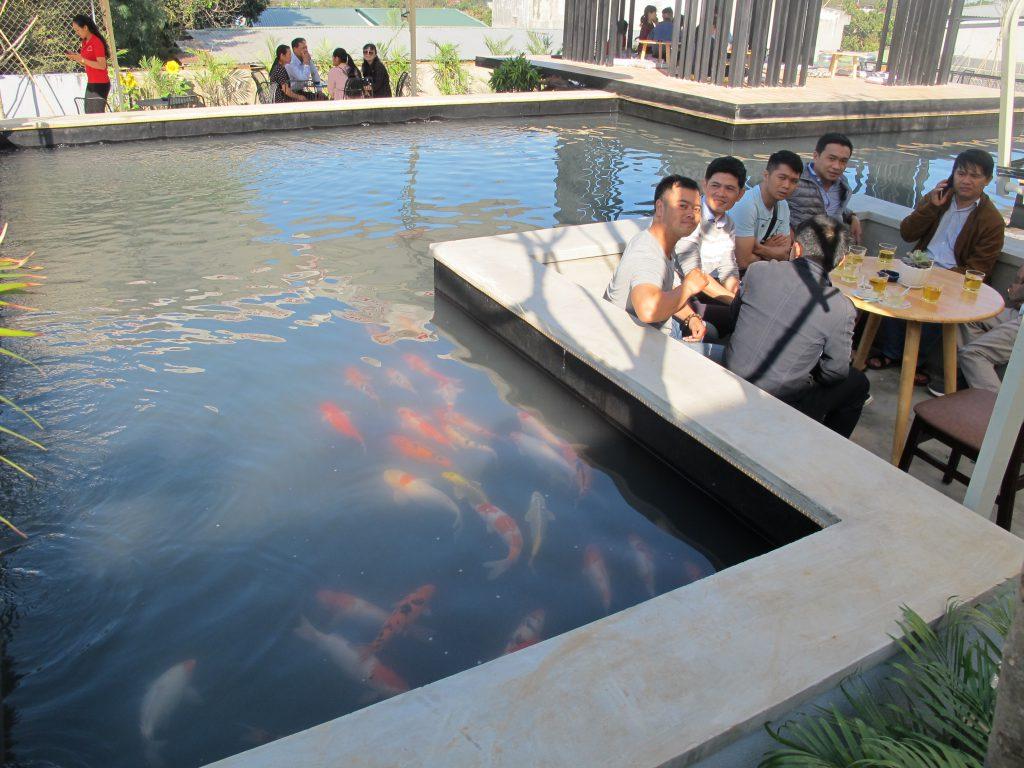 Thưởng thức cafe bên hồ đàn cá Koi Nhật Bản